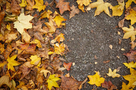 Top view of the colorful autumn leaves lying on the ground. Fading maple and other leaves are scattered on the ground. Copy space. Autumn concept.