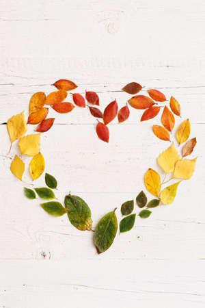 Nahaufnahme von herbstlichen verblassenden Blättern, die auf einem weißen Holztisch liegen. Rahmen in Form eines Herzens für den Text von bunten Blättern. Platz kopieren. Herbstkonzept