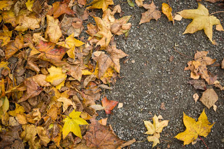 Top view of the colorful autumn leaves lying on the ground. Fading maple and other colored leaves are scattered on the ground. Place for text. Autumn concept.