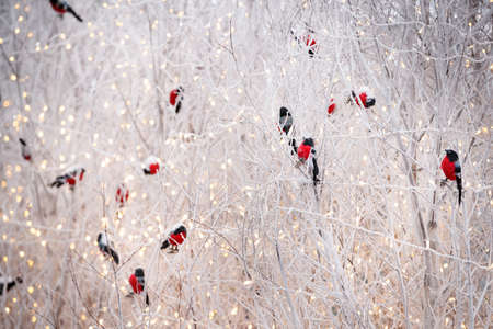 Bullfinch toy sitting on the branches of a tree on a frosty day. Decor for the celebration of Christmas. Celebration concept 스톡 콘텐츠 - 130400808