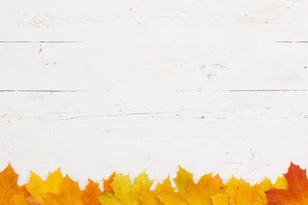 Many multi-colored maple leaves lie on a white wooden table. Free space with yellow, orange and red maple leaves at the bottom of the frame. Autumn concept. Directly above