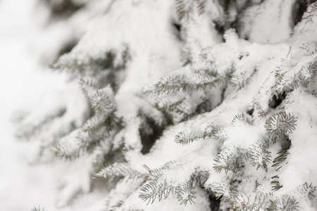 Closeup of a Christmas tree with snow. Festive season and christmas concept 스톡 콘텐츠