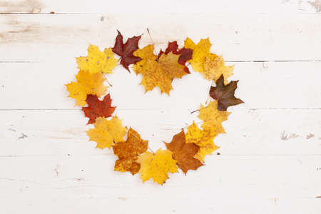 Many multi-colored maple leaves lie on a white wooden table. In the center is copy space, a frame in the shape of a heart. Autumn concept 스톡 콘텐츠 - 131925998