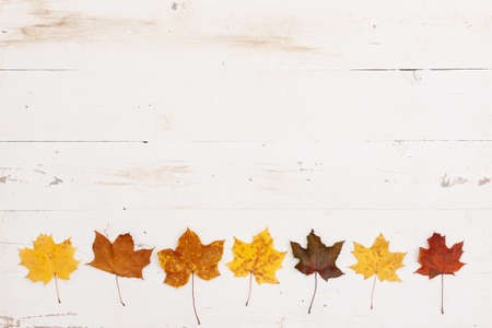 Yellow, orange and red maple leaves lie on the bottom edge on a white wooden table. Autumn concept 스톡 콘텐츠 - 131926281