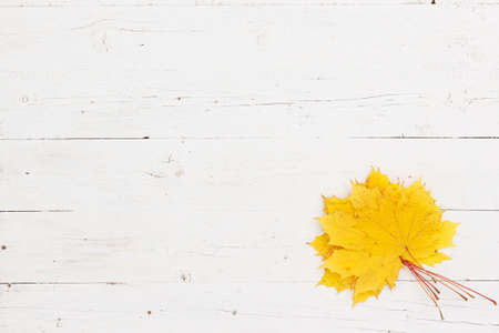 Bouquet Maple leaves of yellow color lie on a white wooden table. Top view on maple leaves. Autumn concept