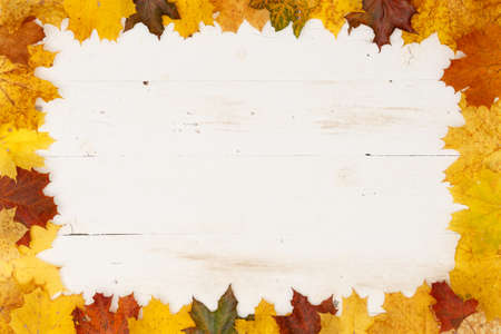 Many colored maple leaves lie on a white textured wooden table. Frame of autumn leaves. Copy space inside frame