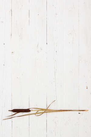 Minimalistic look at reed bulrush. Bulrush lies on a white wooden table. Directly above