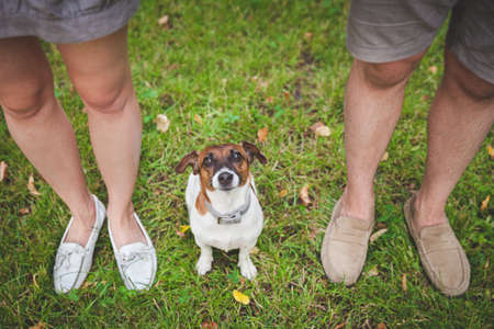 A cute puppy Jack Russell Terrier sits between the owners and looks up. Top view of the obedient dog and the feet of the owners. Walk in the park with a dog.
