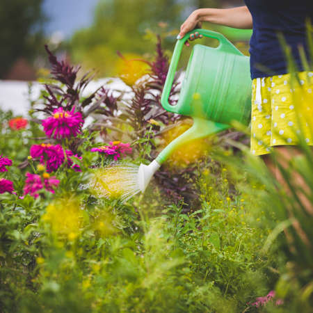In the garden, a young girl watering beautiful multi-colored flowers from a watering can. Beautiful dahlias grow in a summer house on the lawn. Green watering can in the hands of a woman. Rural life.