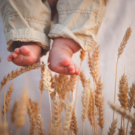 Toddlers legs over the stalks of wheat. Dad holds his son in his arms. Walk in the evening in the field. Healthy eating concept. Toning and artificial noise Banco de Imagens