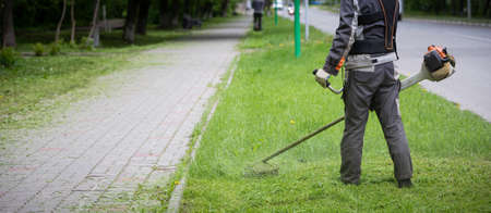 A wide view of the Worker in protective clothing and gloves with a lawn mower in his hands is walking along the lawn nearby along the walking path. A man mows grass with dandelions next to the roadway