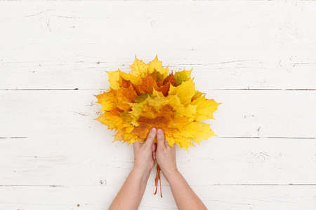 Many colored maple leaves in woman's hands against the background of a white textured wooden table. A bouquet of autumn leaves in the hands of a grandmother.