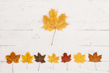 Maple leaves of different colors lie on the bottom edge of a wooden table. A large maple leaf is in the center. Top view on maple leaves. Autumn concept 写真素材