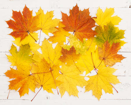 Yellow, red, orange and green maple leaves lie on a white wooden background. Autumn concept Stock Photo