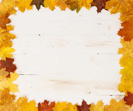 Yellow, red, orange and green maple leaves lie on a white wooden background. Leaves are laid out along the edge with free space inside. Autumn concept Stock Photo