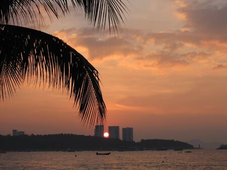 sunset and palm tree photo