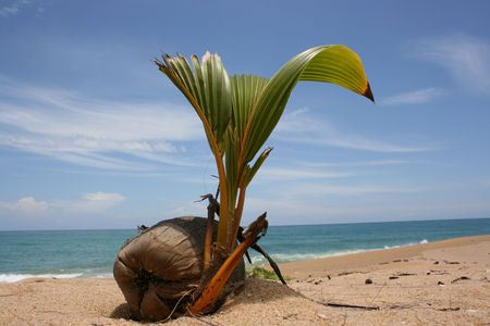 uninhabited: The plant is sprouting up at the uninhabited island Stock Photo