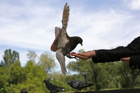 pigeon eating from hands of young girl photo