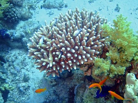 Uderwater landscape with Soft and hard coral photo