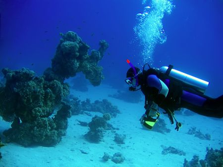 boldness: Underwater landscape with diver