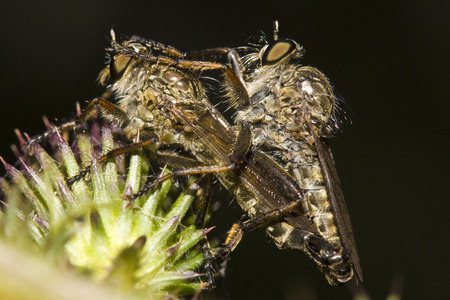 copulate: Insects love close-up