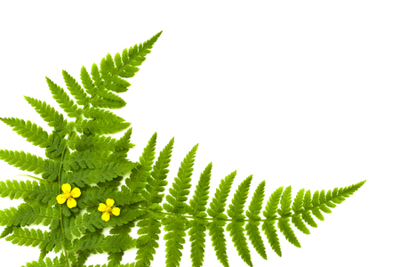 fern frame with small yellow flowers photo