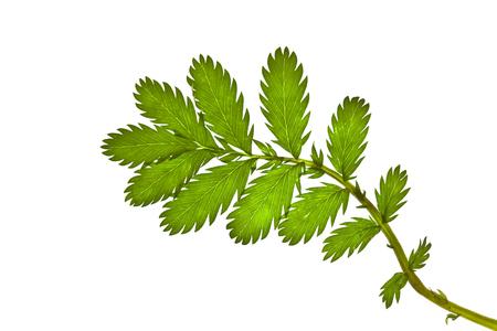 spore: Green grass on white background