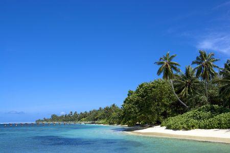 Coast of Indian ocean. Maldives