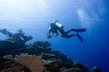 dive: Diver con c�mara en profundidad y burbujas. Underwater fot�grafo