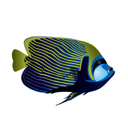 undersea: Tropical fish Angelfish