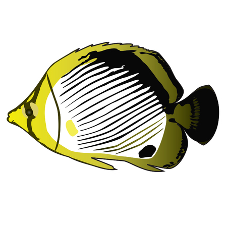 Tropical fish ButterflyFish (Chaetodon). Vector Vector
