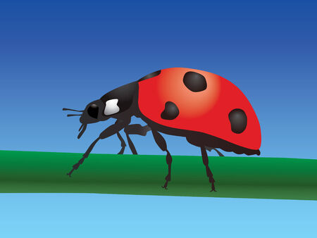 beetling: Ladybird Illustration