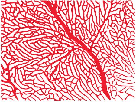 Structuur van een koraal soortgelijk labyrint
