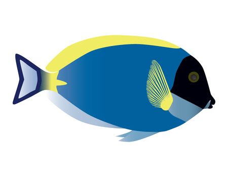 atoll: Surgeonfish