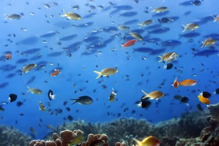 Underwater landscape with many small fishes and coral. Sipadan Stock Photo - 3079020