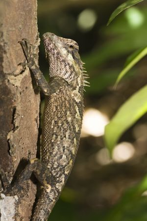 Lizard on the tree close-up Stock Photo - 3281510