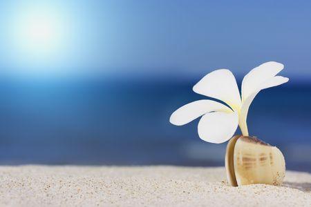 Tropical flower Plumeria alba and seashell on the sandy beach