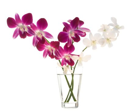 florero: Bouquet de orqu�deas en florero isoladet sobre fondo blanco Foto de archivo