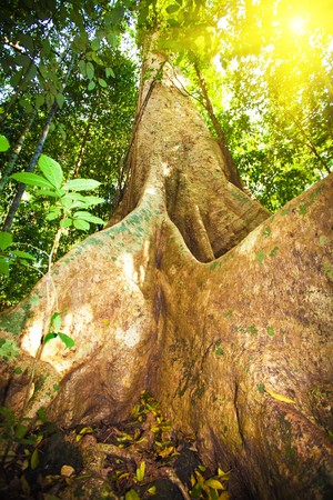 Big old tree in deep forest at sunny day photo