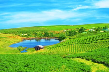 Tea plantation on central highland in Vietnam. Stock Photo - 4603755