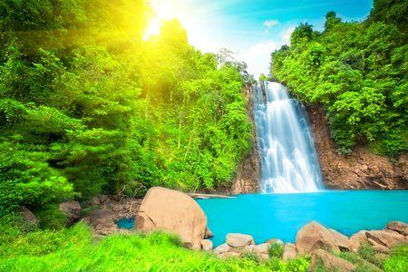 the cascade: Cascada en el bosque lluvioso