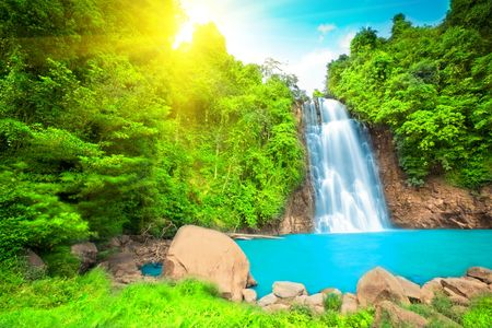 background waterfalls: Waterfall  in rain forest