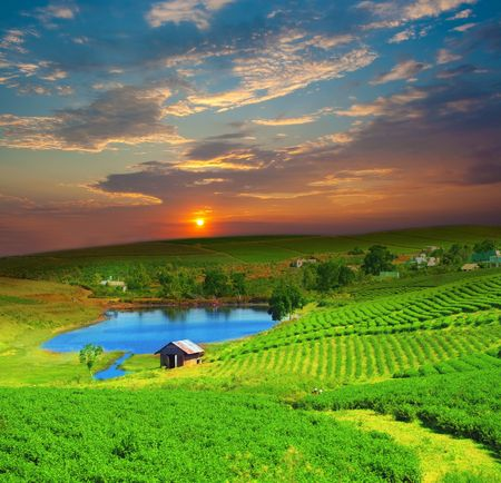 Tea plantation on central highland in Vietnam. Stock Photo