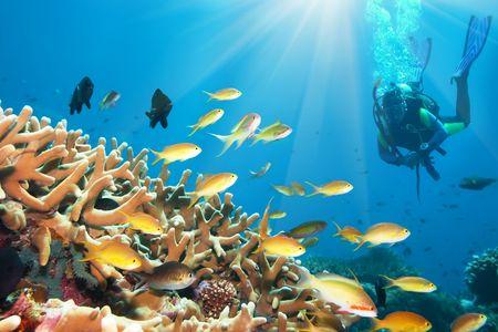 Onderwater landschap met kleine vissen en duiker. Borneo Stockfoto