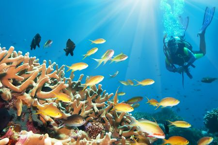 diver: Underwater landscape with small fishes and diver. Borneo Stock Photo