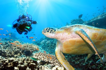 Green turtle underwater and diver. Sipadan. Celebes sea photo