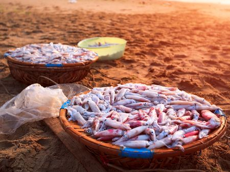 squid in basket on fish market. Vietnam photo