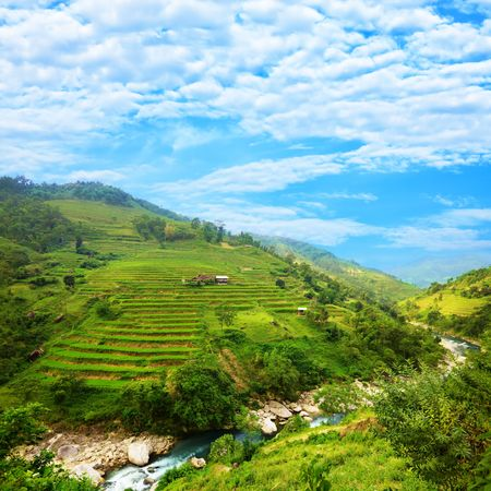 asian produce: Rice field terraces at nothern Vietnam Stock Photo