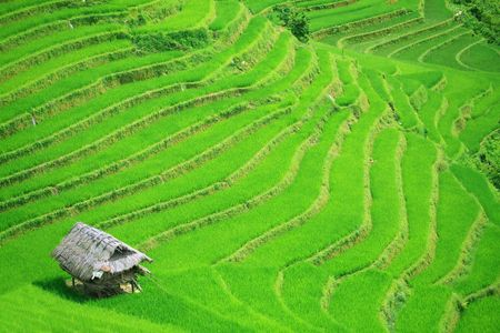 Rice field terraces at northern Vietnam photo