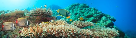 merged: Underwater panorama with coral and fishes. Andaman sea. Merged from 5 images